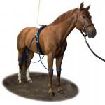 Equine Legcooler Compleet